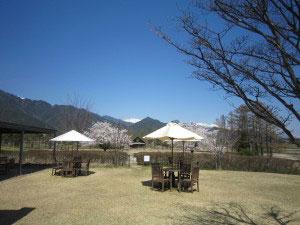 カフェの様子桜2014年4月ブログ用